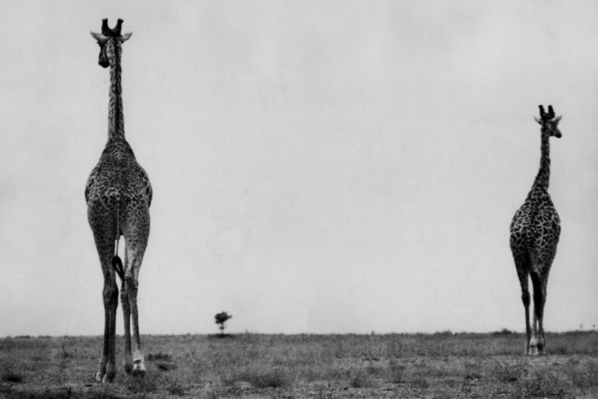 marc riboud Kenya, 1961